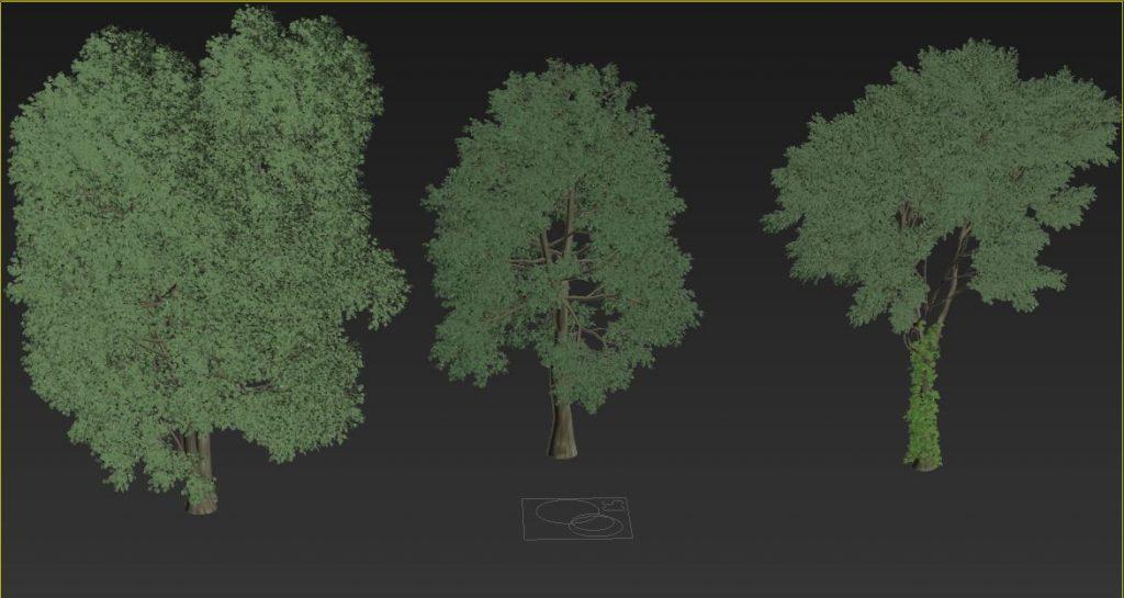 Claudiu Hanga Lakeside Summer grass+shrubs trees