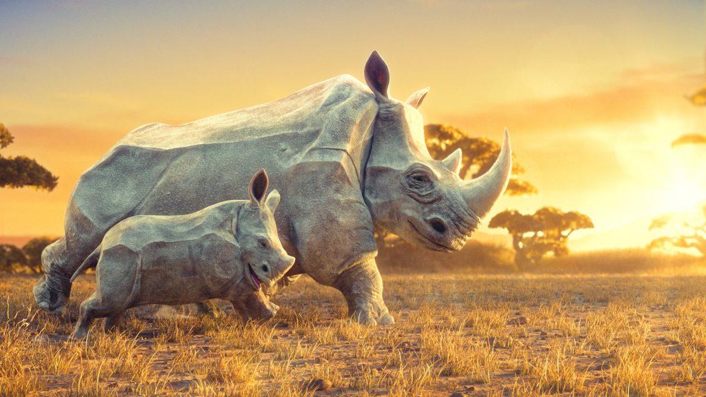 Zombie Studio, Dream, rhinos