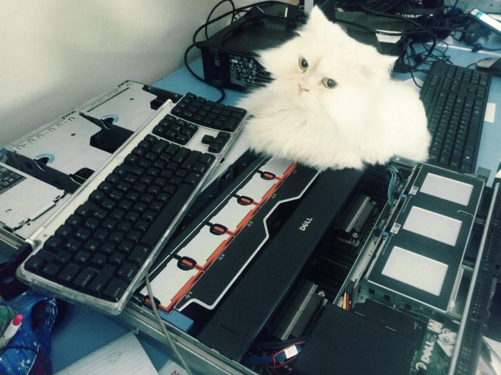 Hardware and kitten at GarageFarm.NET